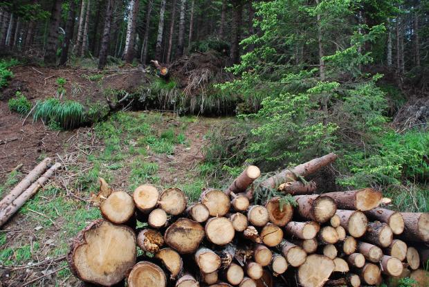 Стотици хиляди проверки са проведени в горите през 2017 г.
