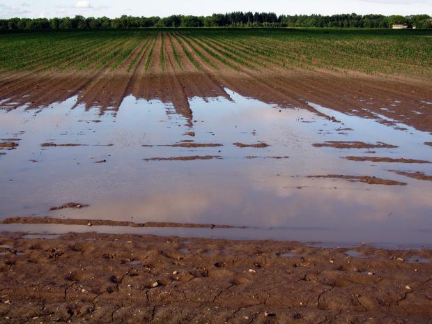 Топлата и дъждовна зима съсипва земеделието и околната среда на Финландия