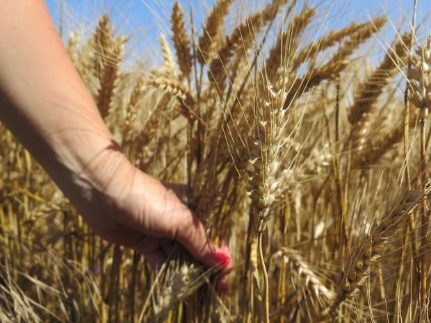 Раздвижване на експортния фронт на зърнените пазари в Европа