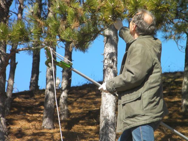 Проведе се първото за годината заседание на кризисния щаб за Борбата с дървесния корояд