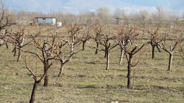 За зимните пръскания на градините се отпускат от 100 до 270 лева на хектар