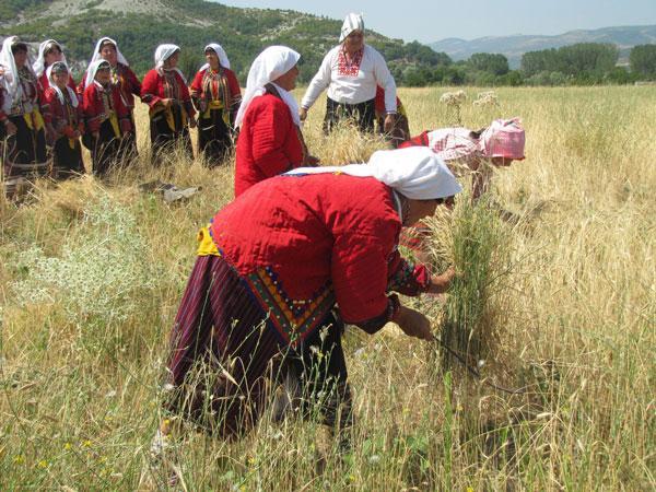 България е лидер в ЕС по ръст на площите с биоземеделие през настоящото десетилетие