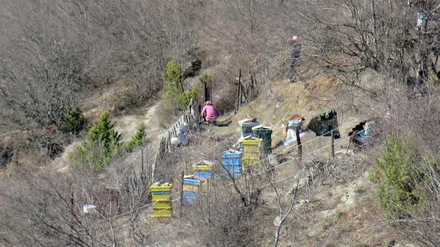 В пчелина през януари