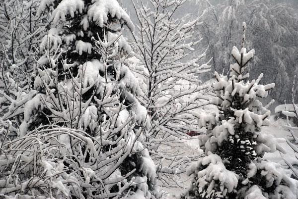 Оранжев код за валежи от сняг и силен вятър за 19 области