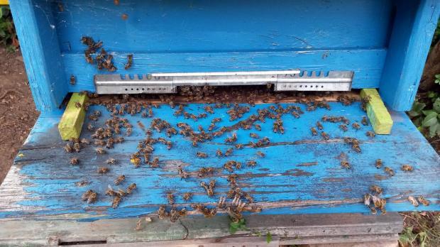 Две момчета причиниха смъртта на половин милион пчели в САЩ