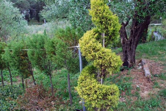 БАБХ и Община Варна с успешен проект за унищожение на вредителя по дърветата Metcalfa pruinosa