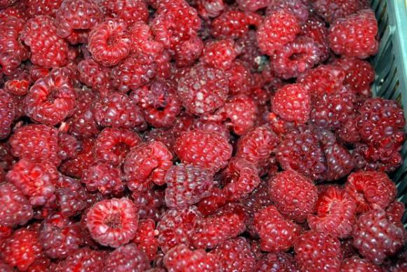 Полша подобри рекорда си по производство на замразени плодове