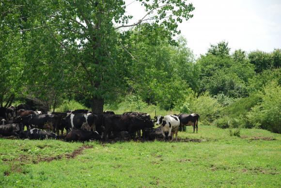 Депутатите влизат в ролята на арбитър за неизплатените субсидии на дребните животновъди