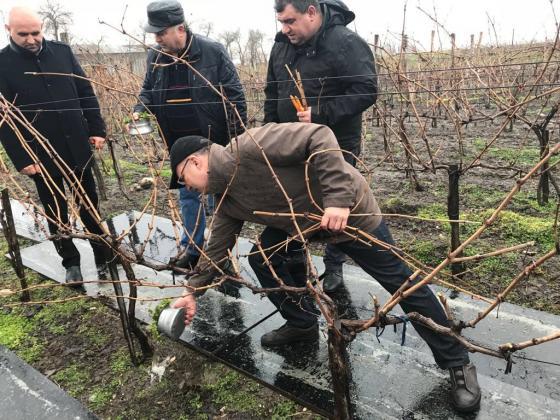 Порожанов: Виното в поне 200 от съществуващите 300 изби в страната е с много добро качество