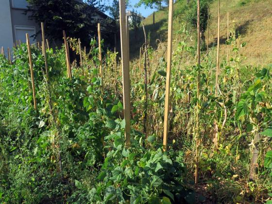 Залагаме отсега силна бъдеща реколта от плодове