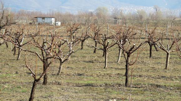 Календар за месец март – овощни дървета