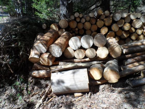 Жандармерията в Самоков задържа нарушител с крадени дърва