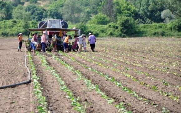 Нелегалните работници във фермите в Европа достигат до 60 на сто