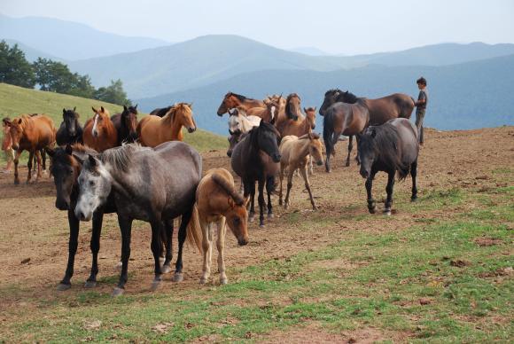 Джи пи ес за животни е сред новостите на ловното изложение в Пловдив