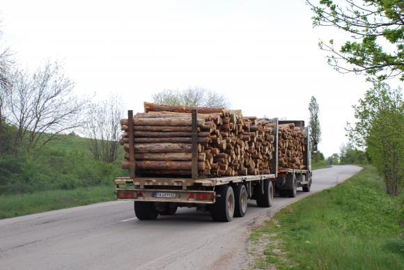 На 22 март еколози организират протест с искане за забрана на износа на дървесина