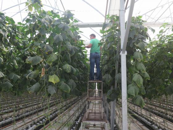 Определиха размера на плащането по схемата за обвързано подпомагане за оранжерийни зеленчуци