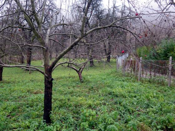 Календар за месец април – овощни дървета