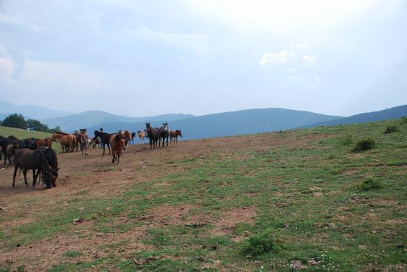 Порожанов: Спират плащанията на собственика на конете от Осогово, докато приключат проверките