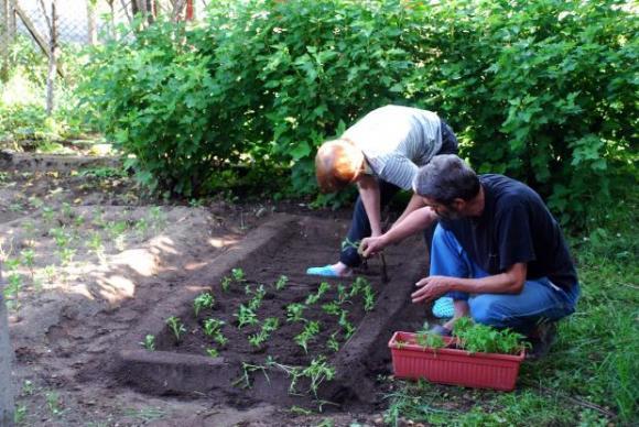 Кога можем да садим зеленчуковите семена и разсада на открито