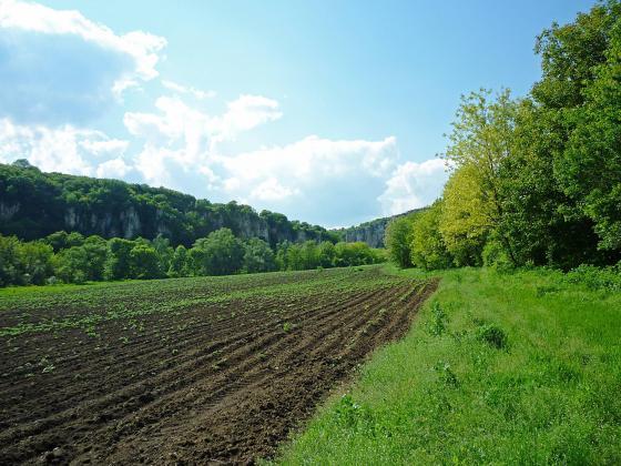 Миналата пролет са засети над 1,1 млн. дка слънчоглед, тази – едва 8 хиляди