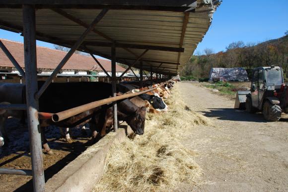 Спадът при млечните крави през 2016 г. изненада и икономистите