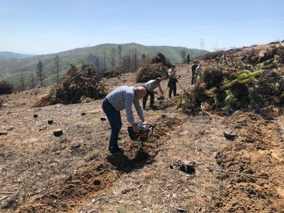 Залесяват Кресненското дефиле с 6 500 фиданки