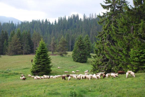 Евродепутат сондира мнения за въвеждане на български планински продукт