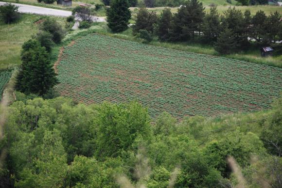 Очаквано за фермерите, закъснение има и при зелените плащания