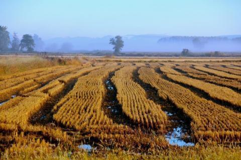 Порожанов обеща да преразгледа нормите за покриване на акциза при оризопроизводството