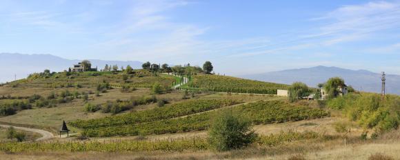 """Как младата винарна """"Либера"""" ухажва любителите със стари български сортове"""