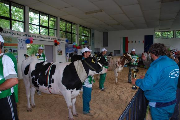 Търг на елитни животни ще се проведе за първи път по време най-голямото животновъдно изложение в Сливен