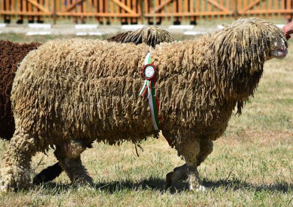 На изложението в Сливен бяха продадени елитни животни за над 50 хиляди лева