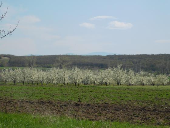 Календар за месец май - овощни дървета