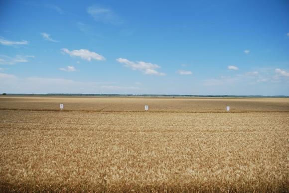 CAPA с твърде уклончива прогноза за зърнената реколта през 2018 г.