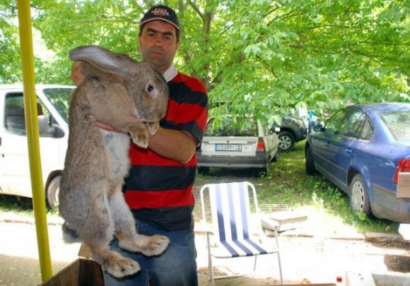 Зайците ще могат да се отглеждат биологично