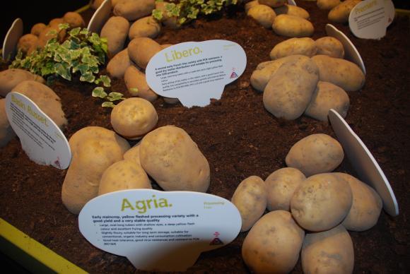 Какво е елитен картоф и какви са неговите предимства?