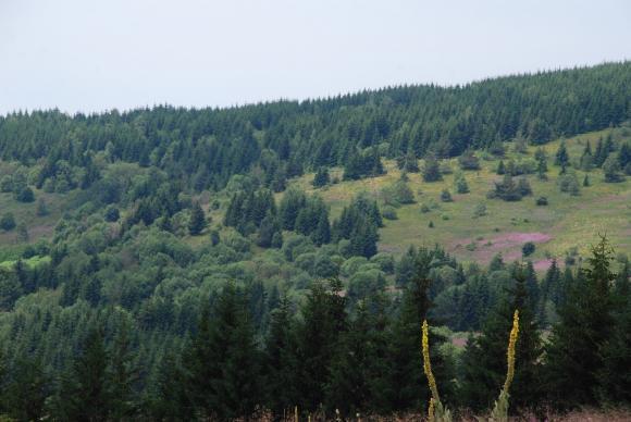 Утвърдени са насоките за кандидатстване по горските мерки