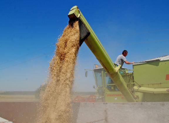 Темпото на руския износ на пшеница изпреварва с 45 на сто миналогодишните стойности