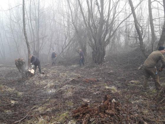 Отворени са всички процедури по горската мярка 8 от селската програма, планирани за 2018 г.