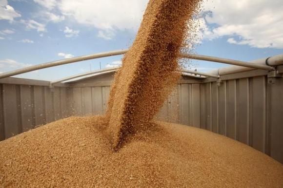 Сделките с пшеница на Софийската стокова борса се сключваха около 287 лв. за тон