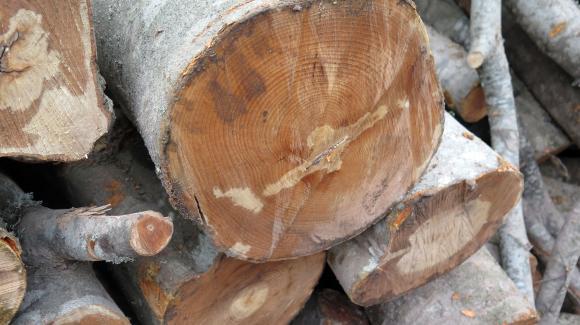В Берковица са задържали 2 коня, 2 каруци, 1 моторен трион и незаконно добита дървесина