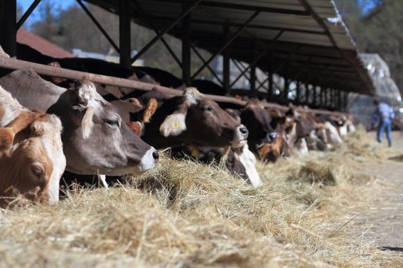 Изненадааа, ставките за обвързана за животновъдите се повишават значително