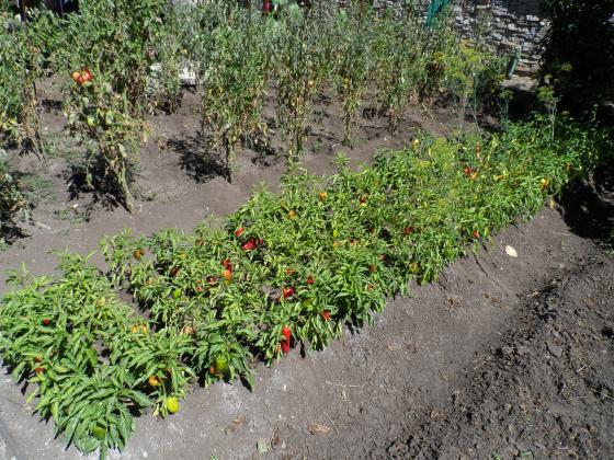 Добросъседство и помощ при растенията