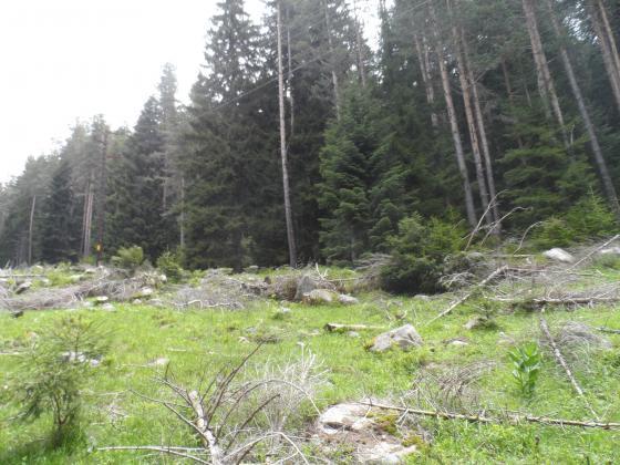 Прокуратурата потвърждава нарушения в парк Пирин, за които еколозите  предупреждават от години