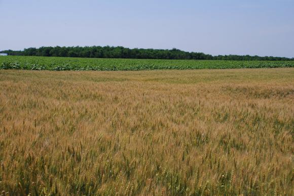 С хиляда и триста фермери по-малко са подали заявления по директни плащания спрямо 2017 г.