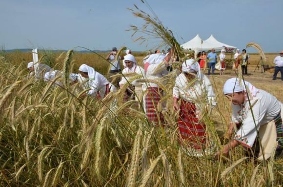 На 21 юни в Сливенско официално се открива жътвата за 2018 г.