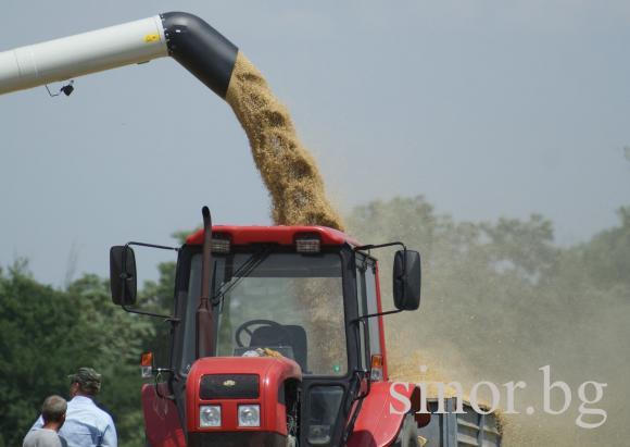 CAPA: Зърнените култури държат половината от брутния продукт в земеделието