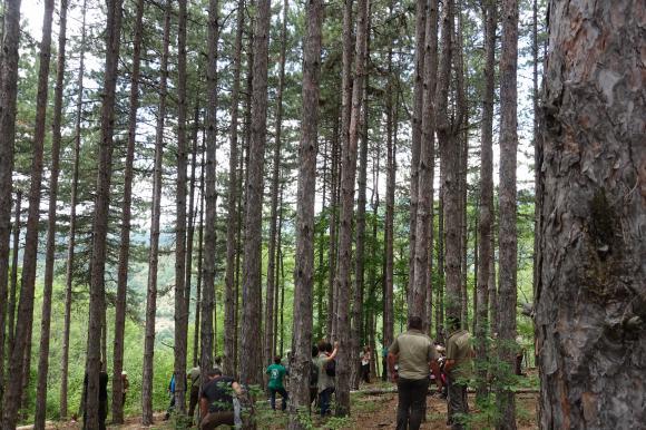 Горски и еколози започват проверки за опазване на териториите