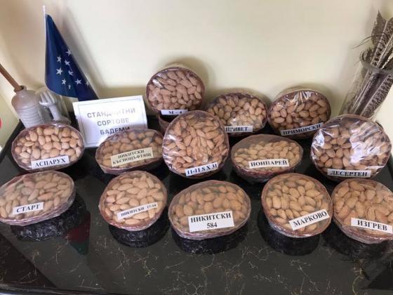 В опитната станция в Поморие се поддържа генофонд от 35 сорта бадеми