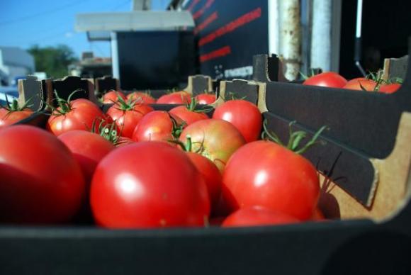 Увредените цветове на доматите трябва да се отстраняват